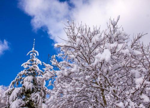 Zima w Wiśle drzewo na tle nieba