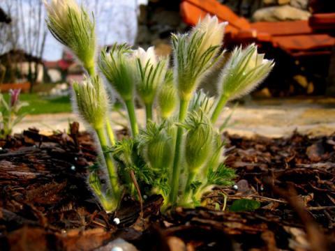 14agro-kwiaty.jpg